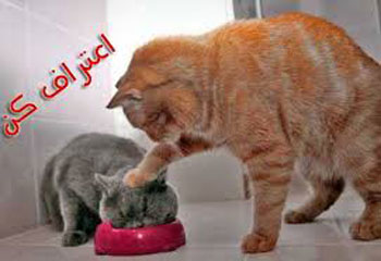 عکس گربه ,  متن خنده دار ,  اعتراف های خنده دار