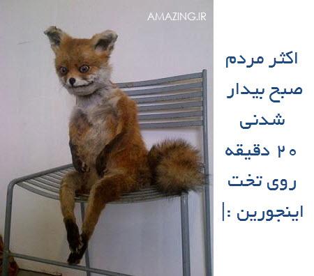 ترول خفن , عکس جدید خنده دار 94 , ترول خرداد 94