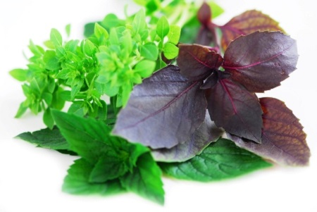 Various types of basil herb on white background