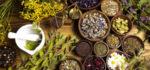گیاهان دارویی جزیره کیش